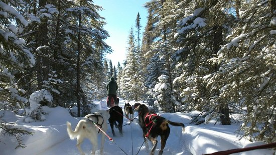 Chilly Dogs Sled Dog Trips: On the trail!