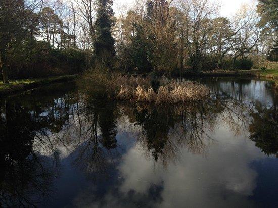 Mercure Shrewsbury Albrighton Hall Hotel and Spa: Pond