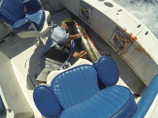 JC's Sportfishing: Bob's Marlin on day 2