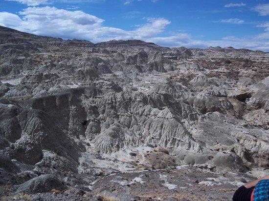 Bosque Petrificado La Leona: El paisaje