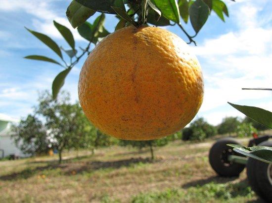 spiky fruit mixon fruit farms