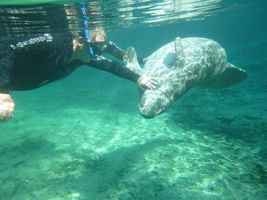 2 Thumbs Up Picture Of Florida Manatee Adventures