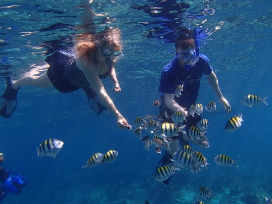The SPA Retreat Boutique Hotel : Snorkeling excursion - Picked up from pool deck by Sun Baby (boat)