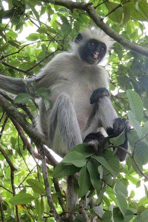 Palumboreef Beach Resort: la scimmia rossa