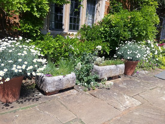 Coton Manor Garden: Lots of beautiful planted containers