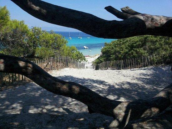 Plage de Saleccia : Spiaggia Saleccia