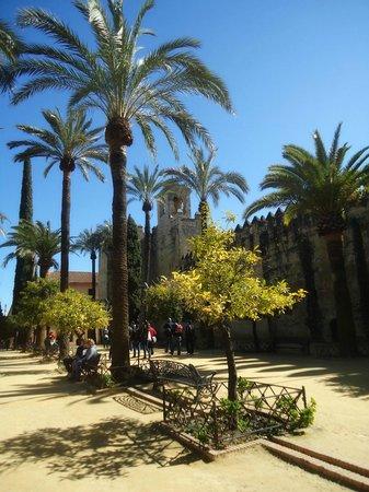 Alcazar de los Reyes Cristianos: Trees