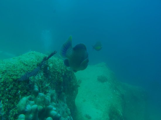Dive Cabo: pelican rock