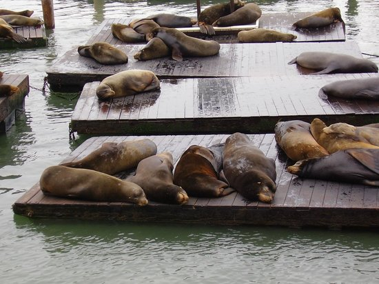 Four Seasons Hotel San Francisco: Seals down by the Fisherman's Wharf