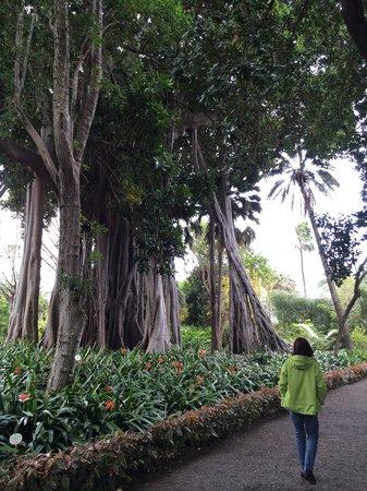 Jardín Botánico: Im Jardin de aclimatacion de La Orotava