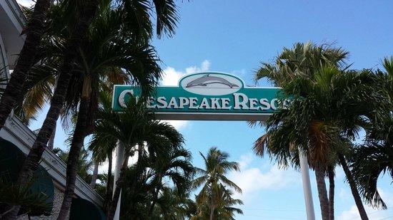 Chesapeake Beach Resort: Overgrown.
