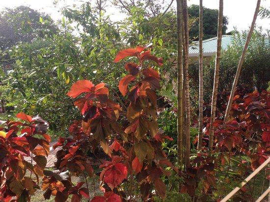 Glenville Gardens: Garden of Eden