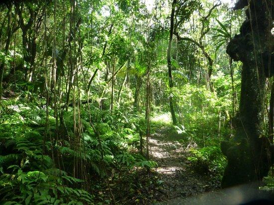 Mount Liamuiga Hike