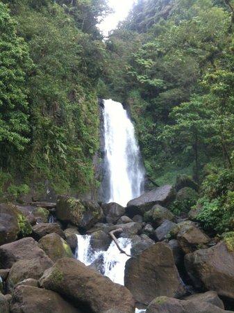 Dominica Botanic Gardens: Ti ritrovi con cascate e sorgenti formidabili camminando per breve tempo per percorsi ben curati