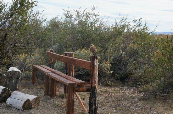 Laguna Nimez Reserve: avisatmiento de aves