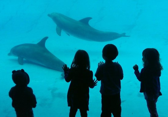 Texas State Aquarium : Watching the dolphins.