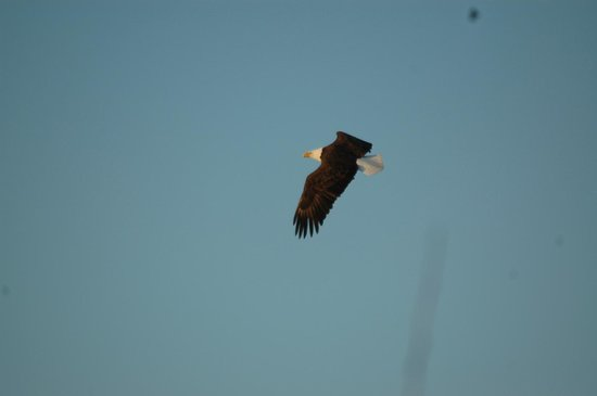 Ruttger's Bay Lake Lodge : A great place to see eagles