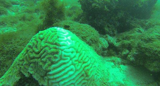 Malmok Reef: Reef!