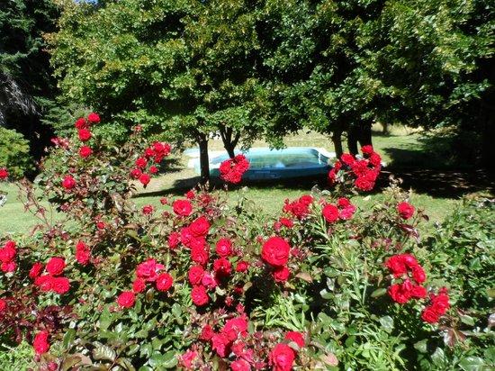 Hosteria Valle del Sol: Rosas rojas, se vislumbra la piscina.