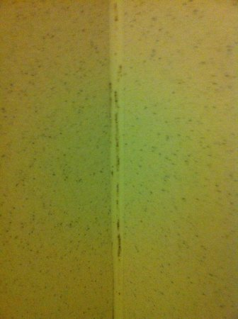 Comfort Suites Cincinnati Airport: Mold in shower