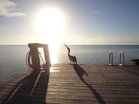Sands of Islamorada Hotel: Meu amigo pelicano!