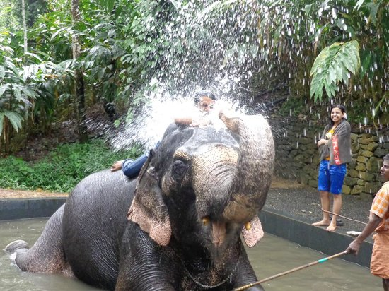Elephant Junction - Day Tours: Shower with Rambha