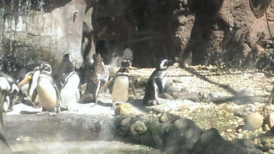 Jacksonville Zoo & Gardens : Penguins !!!!