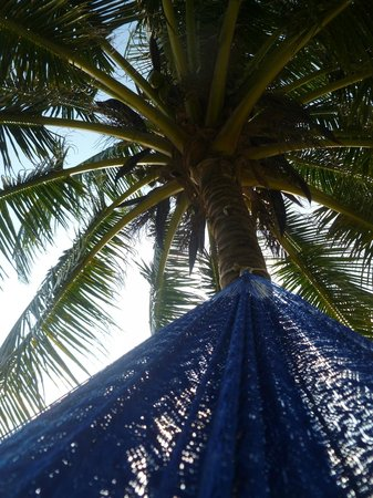 The Landings at Tres Cocos: Hammocks