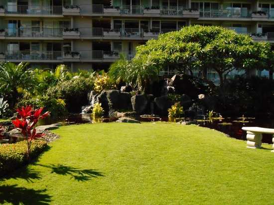 Aston at The Whaler on Kaanapali Beach: The koi pond.  Bridge to pcean is just to the right of this view.