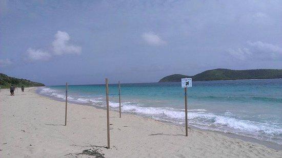Zoni Beach : Leatherback Turtle nesting areas
