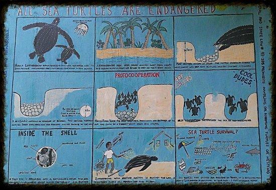 Zoni Beach : Information on the Leatherback turtles