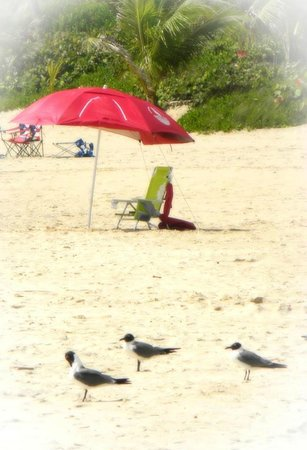 Playa Flamenco: Local residents catching some rays.