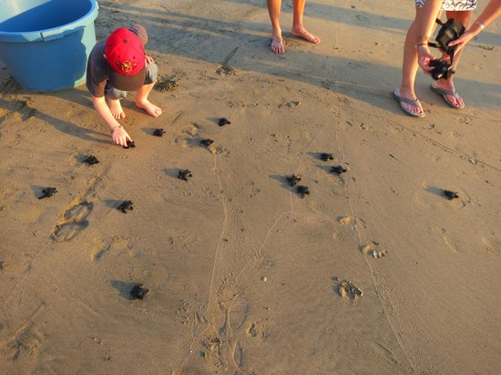 Hacienda Eden: Turtle release