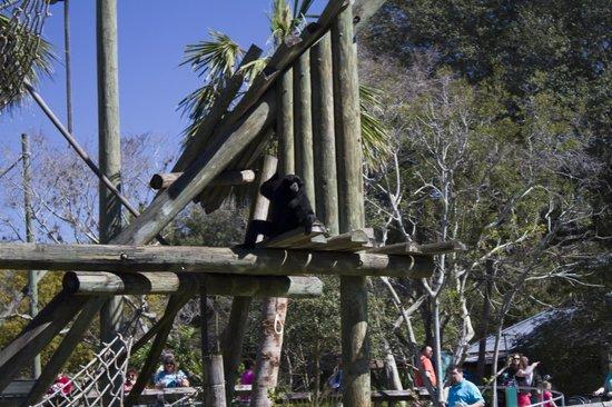Tampa's Lowry Park Zoo: Zoo