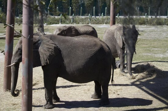 Tampa's Lowry Park Zoo: Elephants