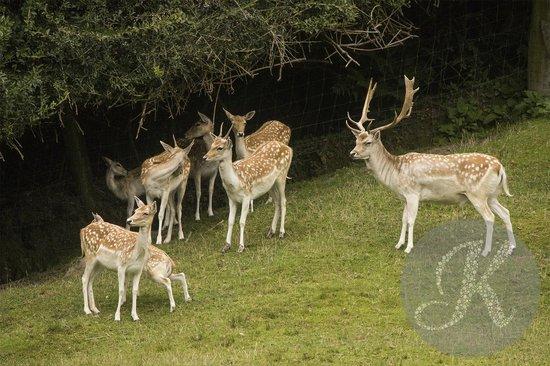Paradise Valley Springs Wildlife Park: Gorgeous deer that look like sculptures!