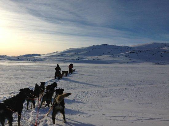 Finse 1222: Passeio diferente... trenó puxado por cachorros na neve.