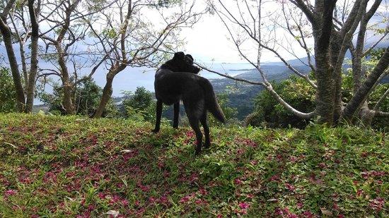 Taiwan Juhu Farmstay: 竹湖山居民宿的腹地-掃別山。民訴接待狗小黑會在前面引路。
