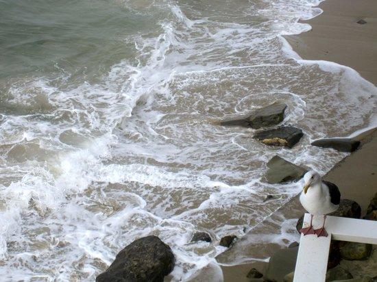 Pacific Edge Hotel on Laguna Beach : view