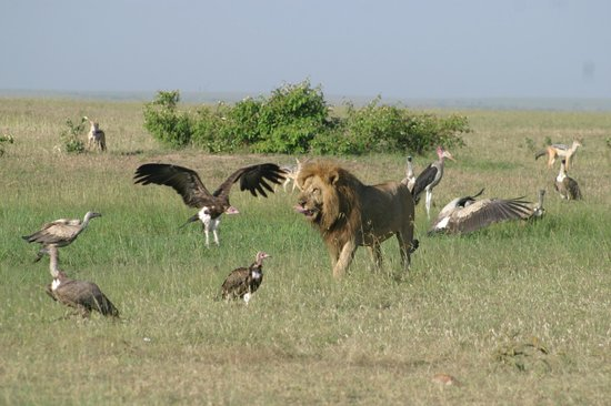 Cactus Day Tours and Safaris: finished with meal & going to get a drink