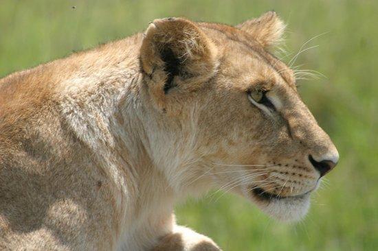 Cactus Day Tours and Safaris: beautiful female