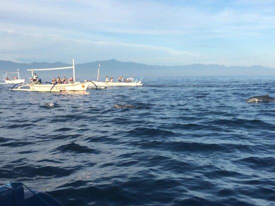 Lovina Beach: dolphins_jgd