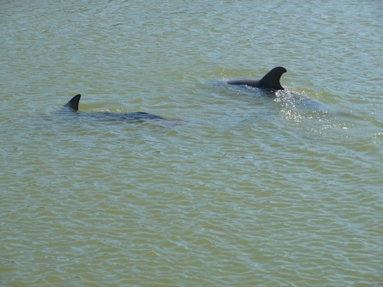 Banana Bay Tour Company Day Tours: Dolphins galore!