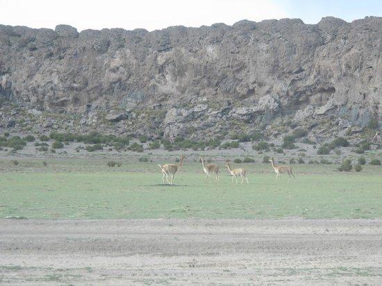Salar de Uyuni: Camino a San Juan