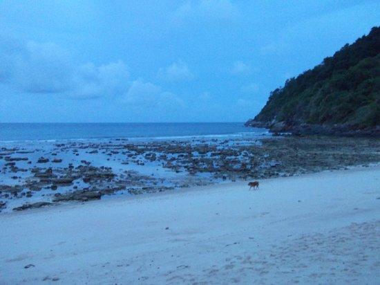 Phuket Marriott Resort & Spa, Merlin Beach: Beach at low tide