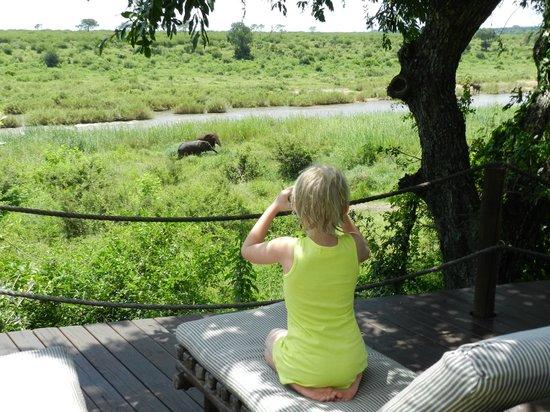 Buckler's Africa: View