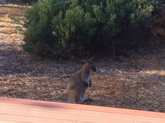 Edge of the Bay Resort: our morning visitor