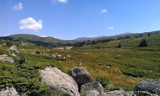 Vitosha Mountain: konyarnika area