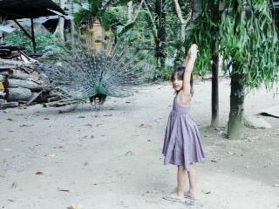 Aonang Cliff View Resort: Attraction...