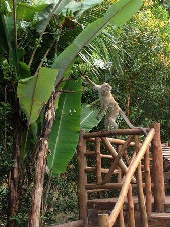 Aonang Cliff View Resort: Pets...